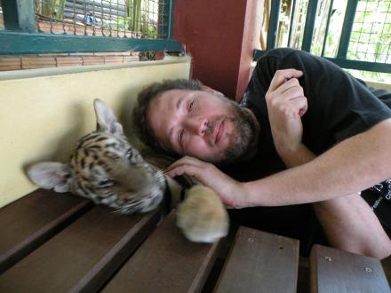 Con los cachorros tigre en Tiger Kingdom