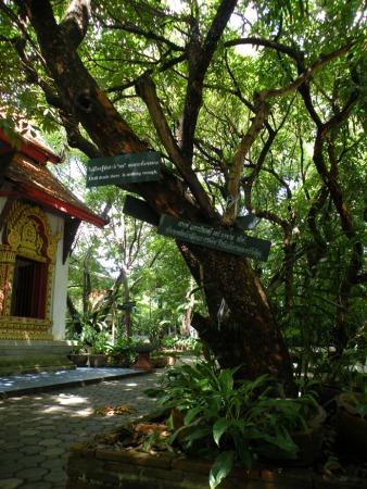 En los arboles ponen frases de Buda